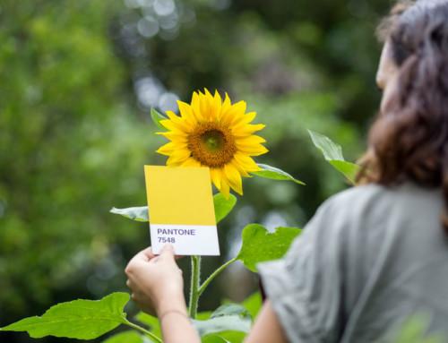 Voo#3 – as hortas urbanas como fonte de inspiração da moda